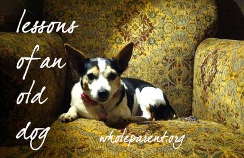 Lessons of an Old Dog: Parenting, Divorce & Codependency