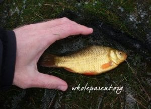 Dating Lessons: Gentle Catch and Release