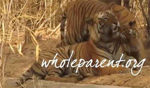 Are We All Hungry Tigers? Passionate? Predatory?